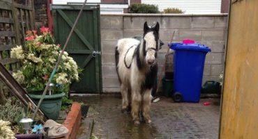 Casual: Una niña de 13 años adoptó un caballo por internet porque YOLO