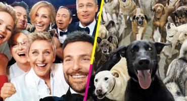 Te han derrocado, Ellen DeGeneres: ¡Esta selfie de perritos es la nueva reina de las selfies! 🐶