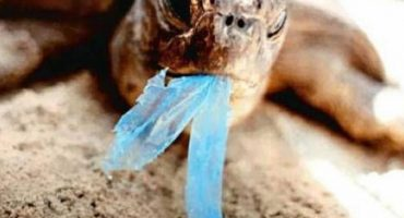 Veracruz: primer estado que prohíbe uso de bolsas y popotes de plástico