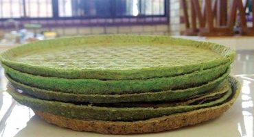¡Bendito nopal! Alumnas de Tamaulipas crean platos desechables de nopal