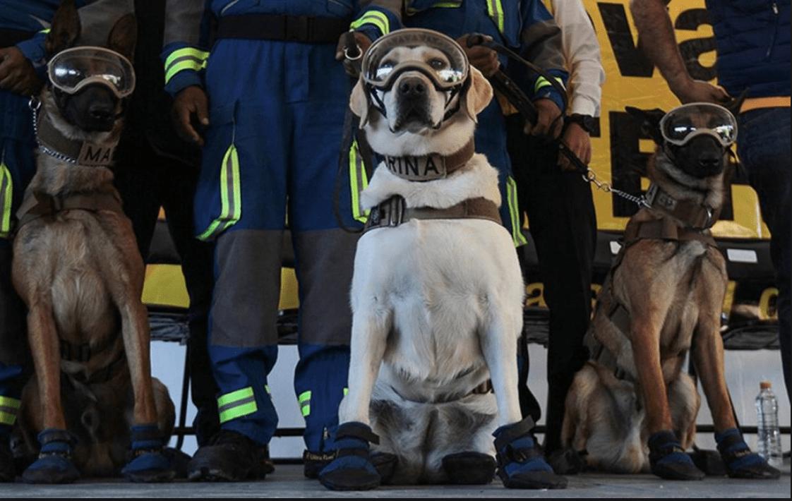 Perrito practica RCP a un agente de la policía de Madrid