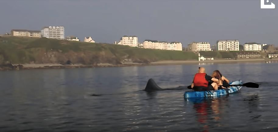 Tiburón espanta a kayakistas