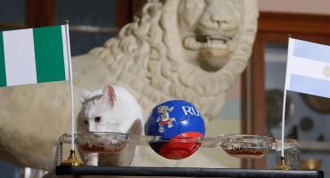 ¡Adiós Messi! El gato Achilles augura la eliminación de Argentina