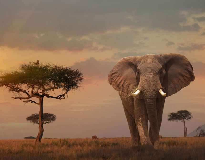 Árboles baobab se mueren en África