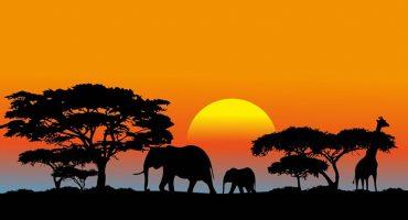 Los milenarios árboles baobab de África se están muriendo y ¡nadie sabe por qué!