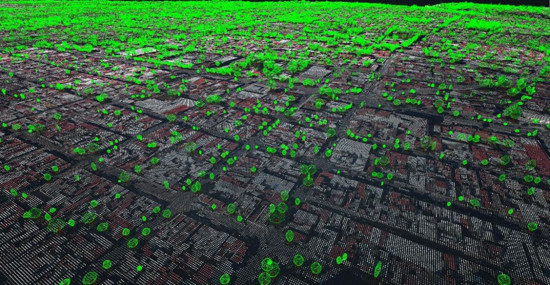 Primer censo forestal en Guadalajara