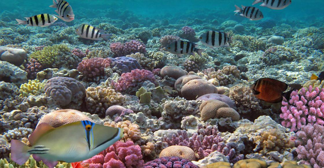 Barrera de arrecifes de Belice ya no está en peligro