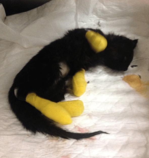 ¡Héroes sin capa! Rescataron a una gatita atorada en el metro de la CDMX