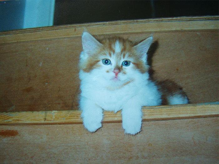 Este gato podría ser el más viejo del mundo