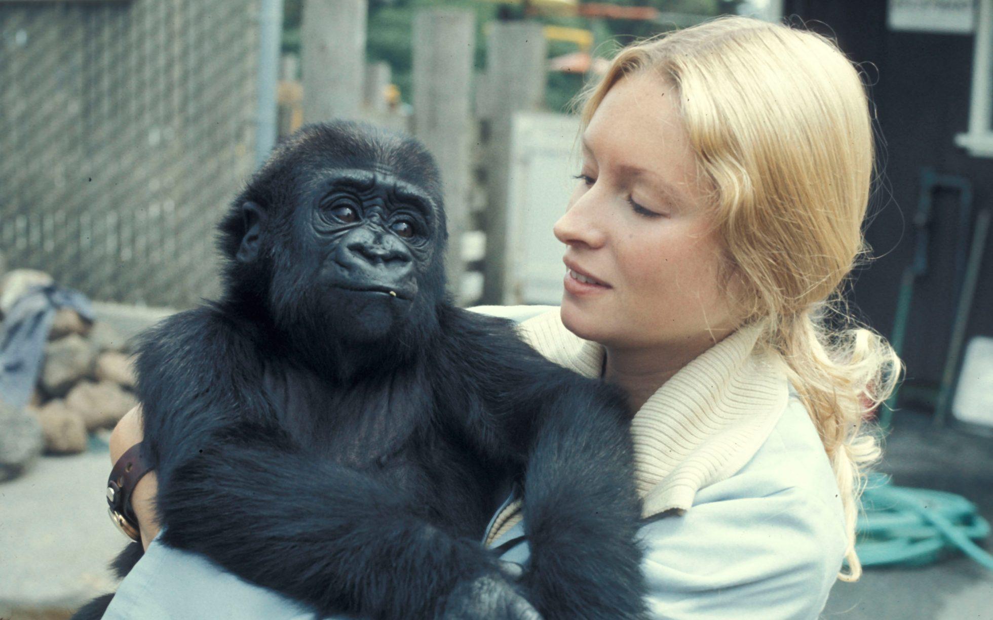 koko-gorila-entrenadora