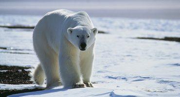 Mundo enfermo y triste: Algunos mamíferos se hacen nocturnos para evitar humanos