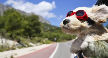 La UNAM da recomendaciones para cuidar a tu mascota ante este calorón