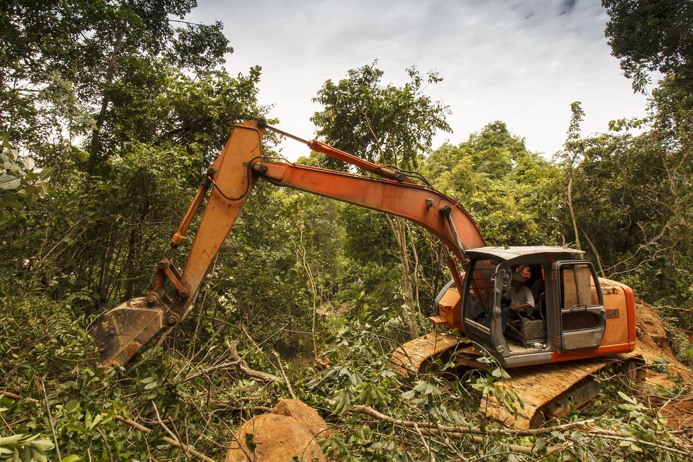 Orangutan defiende su hogar de excavadora
