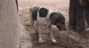 Lagrimita mil: Perrito ayuda a localizar a sus amos entre las cenizas en Guatemala
