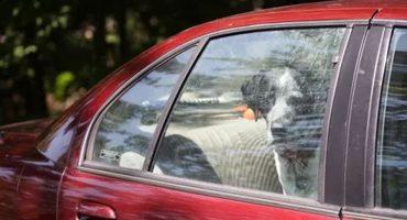 En Baja California multarán a quienes dejen mascotas al interior de sus autos