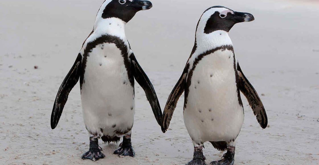¡Ternuringa! Esta pareja de pingüinos está rompiendo Internet