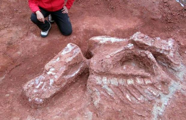 Descubrieron en Argentina un dinosaurio GIGANTE con más de 200 millones de años