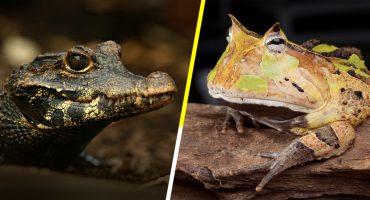 Wow! Descubrieron 12 nuevas especies de animales y una vegetal