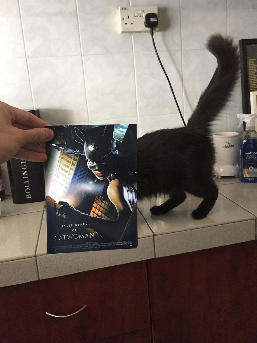 Un fotógrafo recreó algunos pósters de películas usando gatitos... o algo así