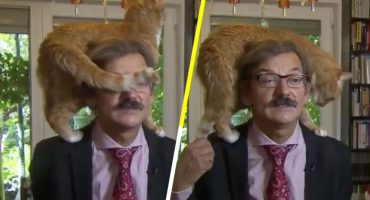 Casual... Un académico polaco da una entrevista con un gato sobre sus hombros