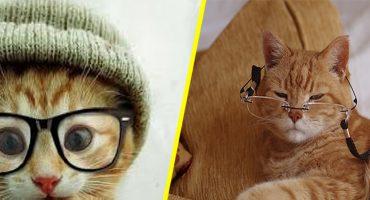¡Meeeeaw! ¿Sabes cuántos años-humano tiene tu gato?