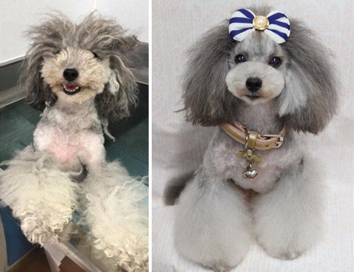 OMG! Esta peluquería canina en verdad transforma el look de los perritos