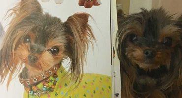 OMG! Esta peluquería canina en verdad transforma el look de los perritos 😱