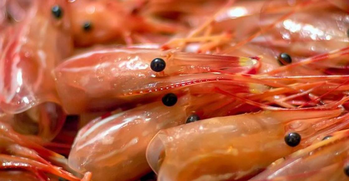 Wow! Este mexicano creó prótesis con cáscaras de camarón