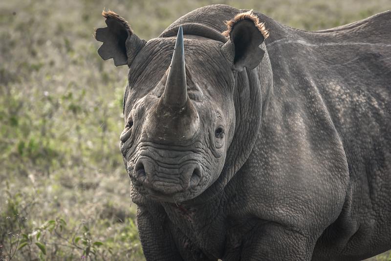 rinoceronte-negro-kenia-2