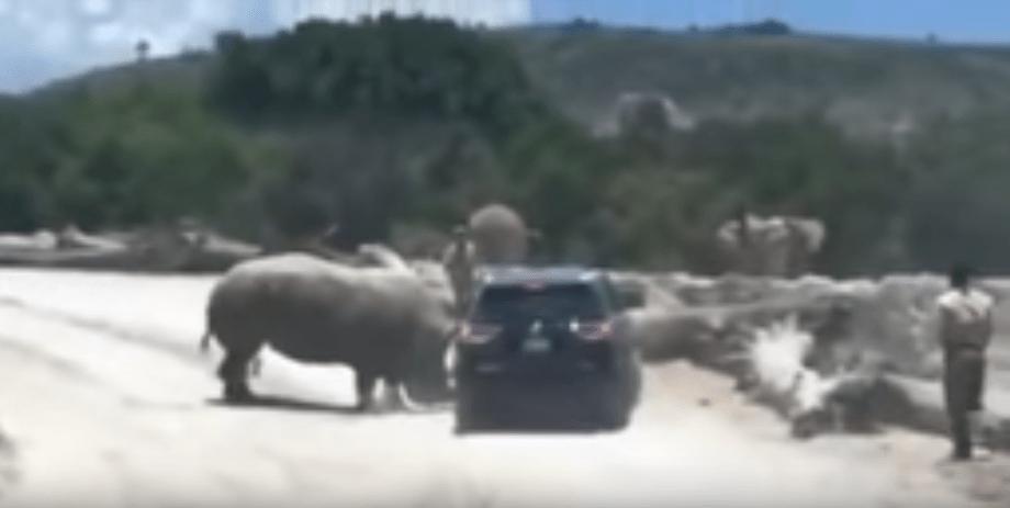 Rinoceronte embiste caro Africam Safari