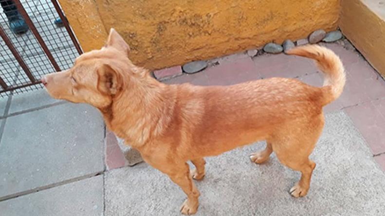 Un ladrón entró a robar a una casa y olvidó a su perro, quien lo delató