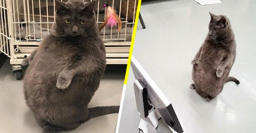 Él es Bruno, el gato, y está conquistando el internet por esta razón