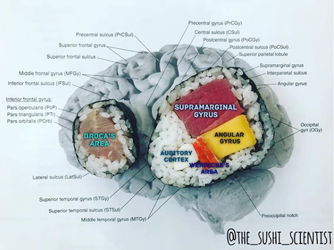 Esta científica explica con sushi lo que pasa en tu cerebro