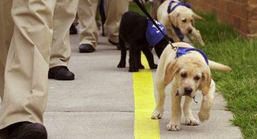 Adolescentes conflictivos entrenarán perros como parte de su reinserción social ❤️