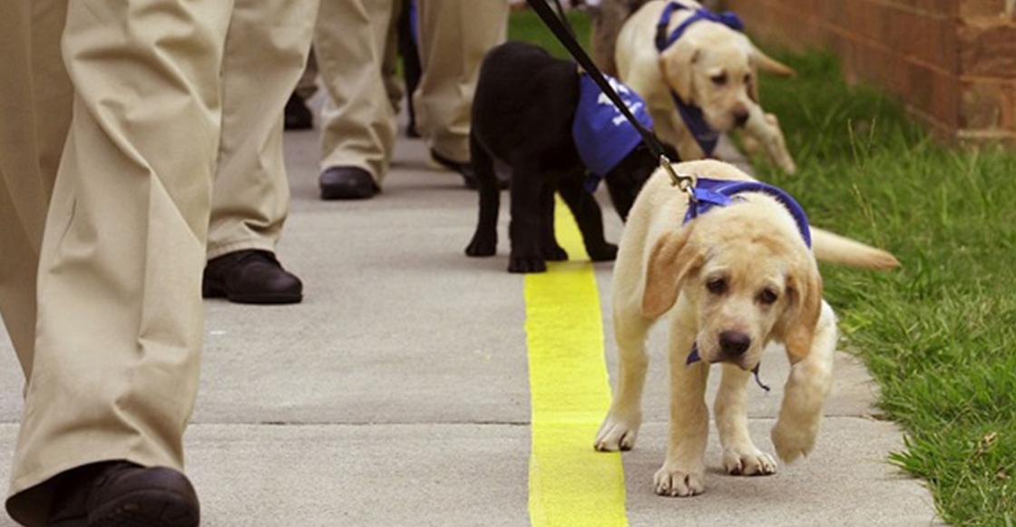 Promueven programa Dejando Huella para entrenar perros