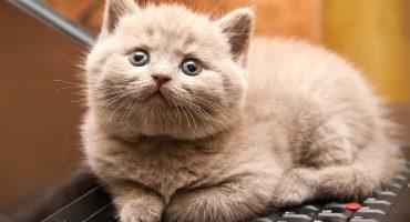 10 momentos en la vida en los que seguramente quisiste ser gato