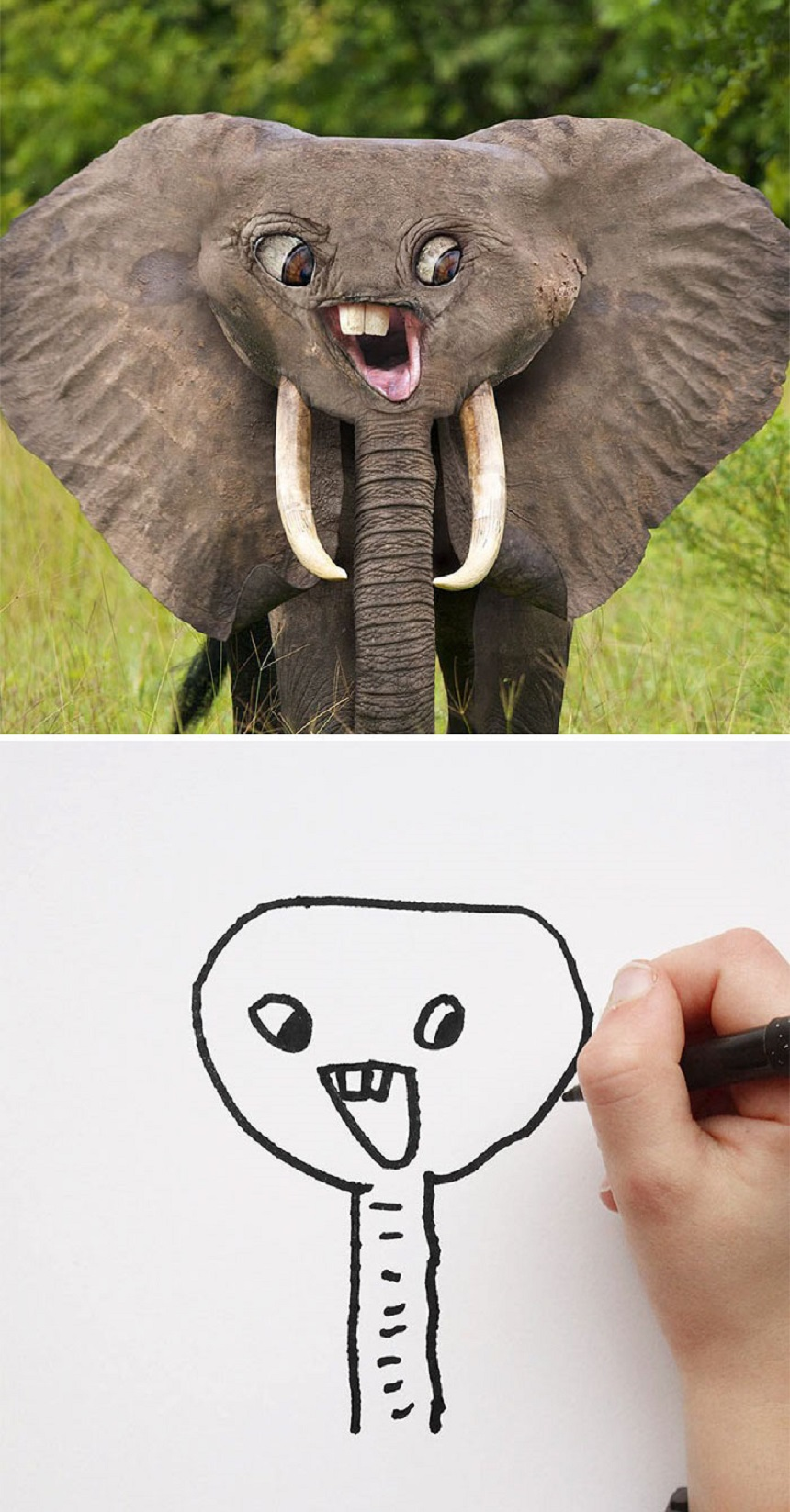 Dibujo de un elefante
