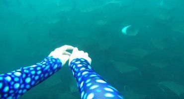 Buceadora nada con cientos de mantarrayas y el video es asombroso