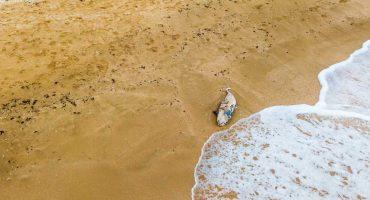 Aparece en playa de Oaxaca un delfin asfixiado por culpa de un pañal 😞