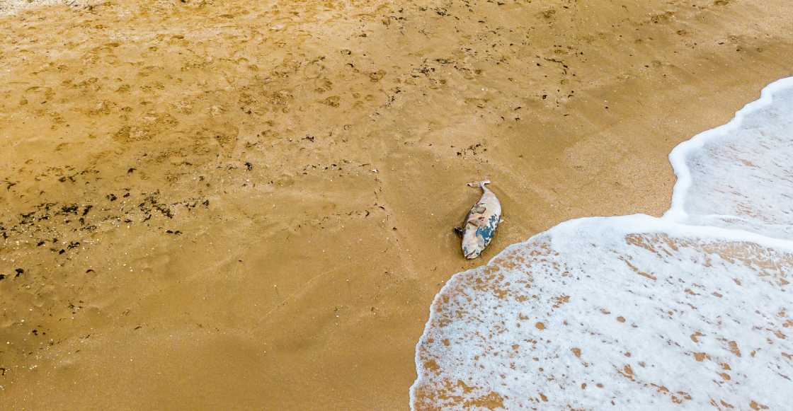 Aparece en playa de Oaxaca un delfin asfixiado por culpa de un pañal