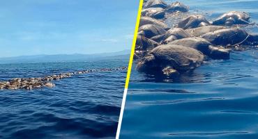 No solo son los popotes: Mueren atrapadas 200 tortugas en las costas de Oaxaca