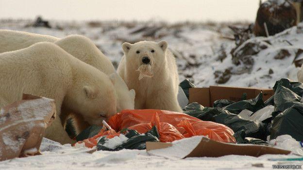Animales están muriendo por comer basura, ¿qué tiene que pasar?