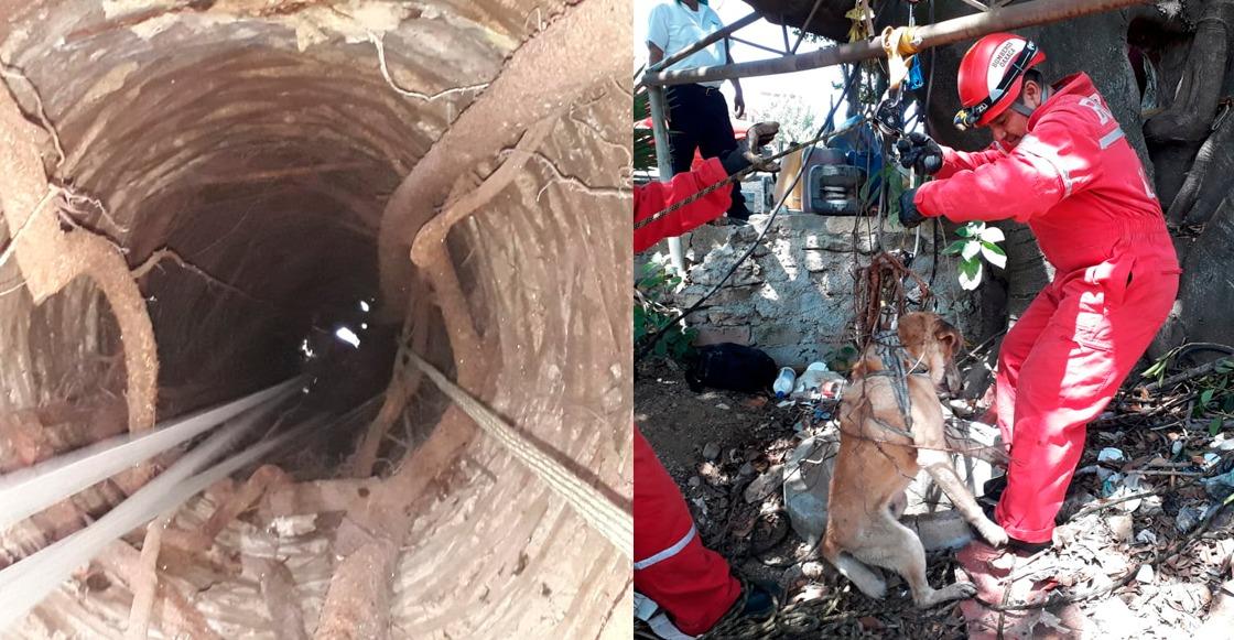 ¡Héroes! Bomberos rescatan a un perrito que cayó a un pozo en Oaxaca