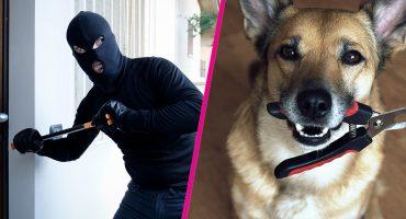 Como cuando asaltas una casa pero te atrapan porque olvidaste a tu perro