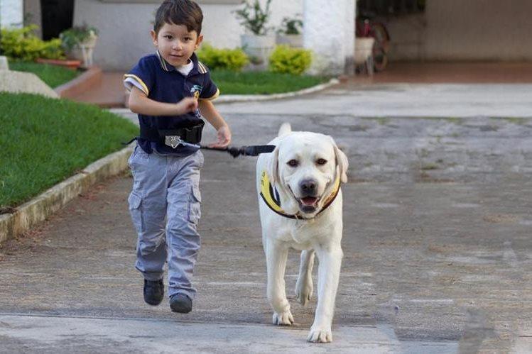 Adolescentes conflictivos podrán entrenar perros como parte de su reinserción social