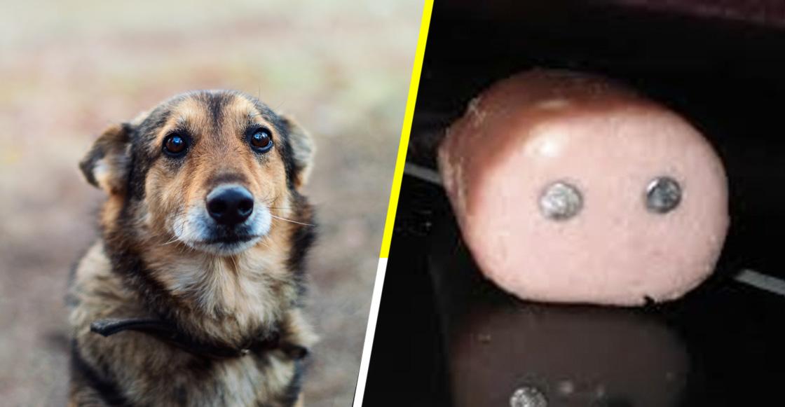 Con salchichas rellenas de clavos matan a perros en España; emiten alerta