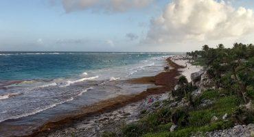 La gran mancha de sargazo llegó a Quintana Roo y ya es 'excesivo'