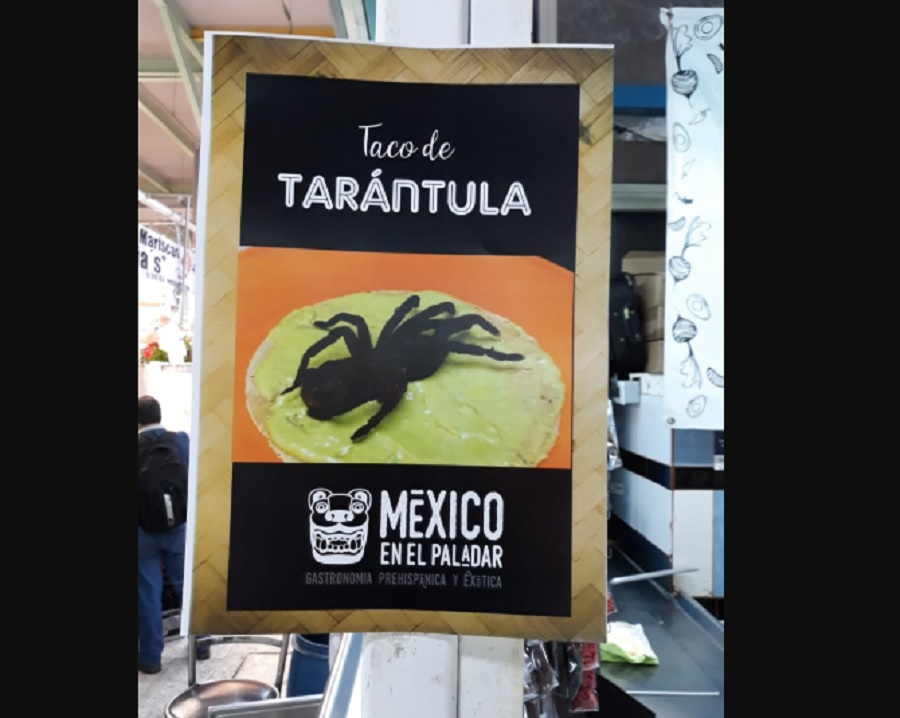 """n atención a publicación en redes sociales, inspectores realizaron visita a """"México en el Paladar""""donde encontraron 4 Tarántulas caderas rojas, flameadas y doradas"""