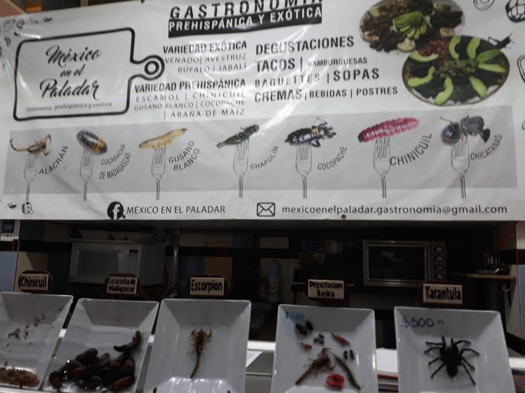 Por no tener permisos, Profepa decomisa tarántulas que restaurante ofrecía en tacos