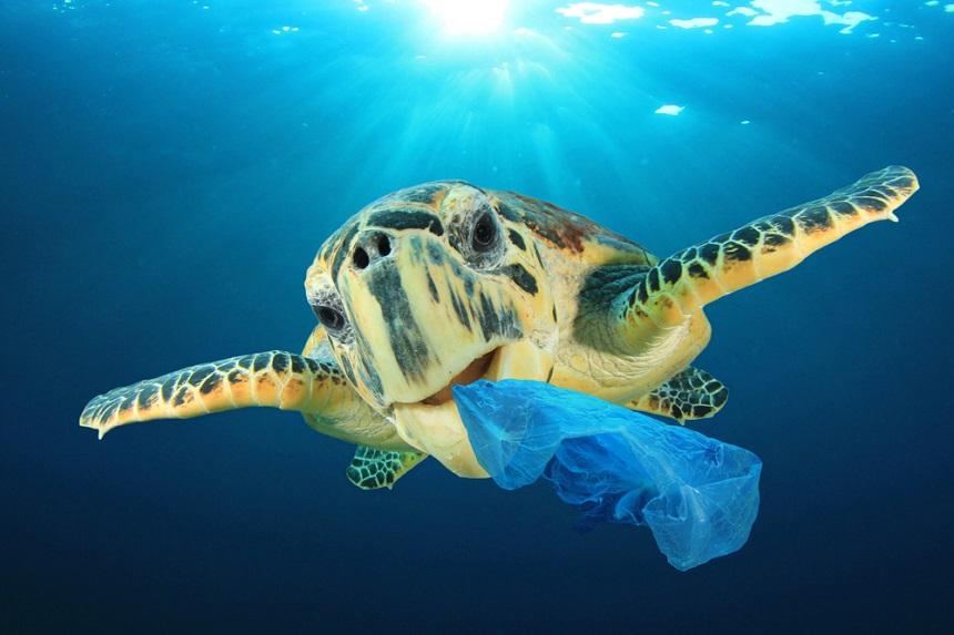 Tortuga marina con bolsa de plástico